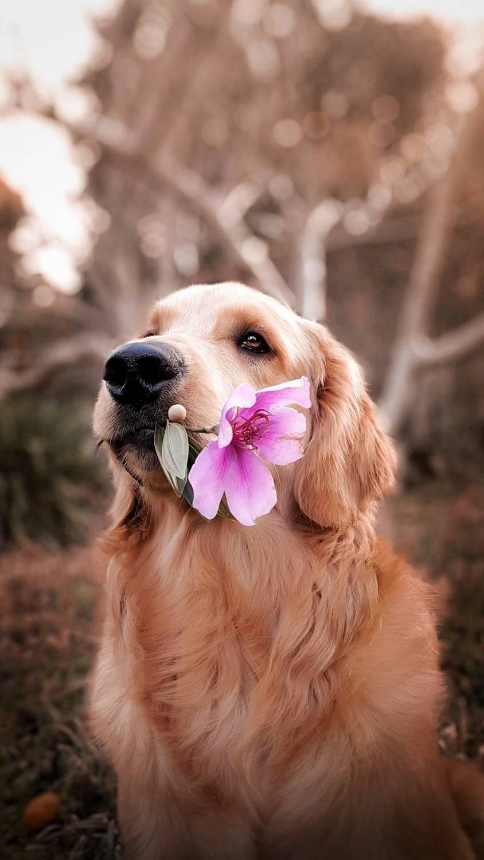 Kremacja psa. Jak wygląda?